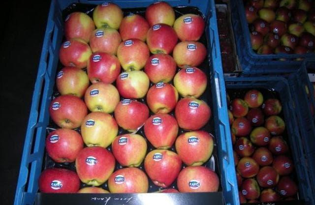 Грузоперевозки пищевых продуктов (фруктов и овощей) - правила - transportica.com