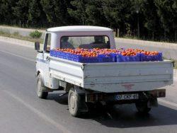 Перевозка томатов открытым бортовых грузовиком.