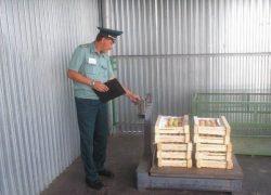 На таможне обязательно проводится проверка грузов согласно предоставленной сопроводительной документации.
